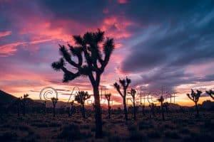 AJ Rich's desert landscape