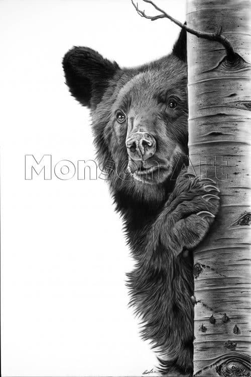 Monson190506-01 Young Black Bear 40×60