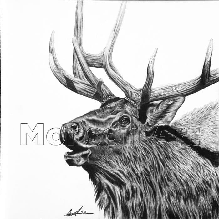 Monson190606-01 20×20 Bugling Elk