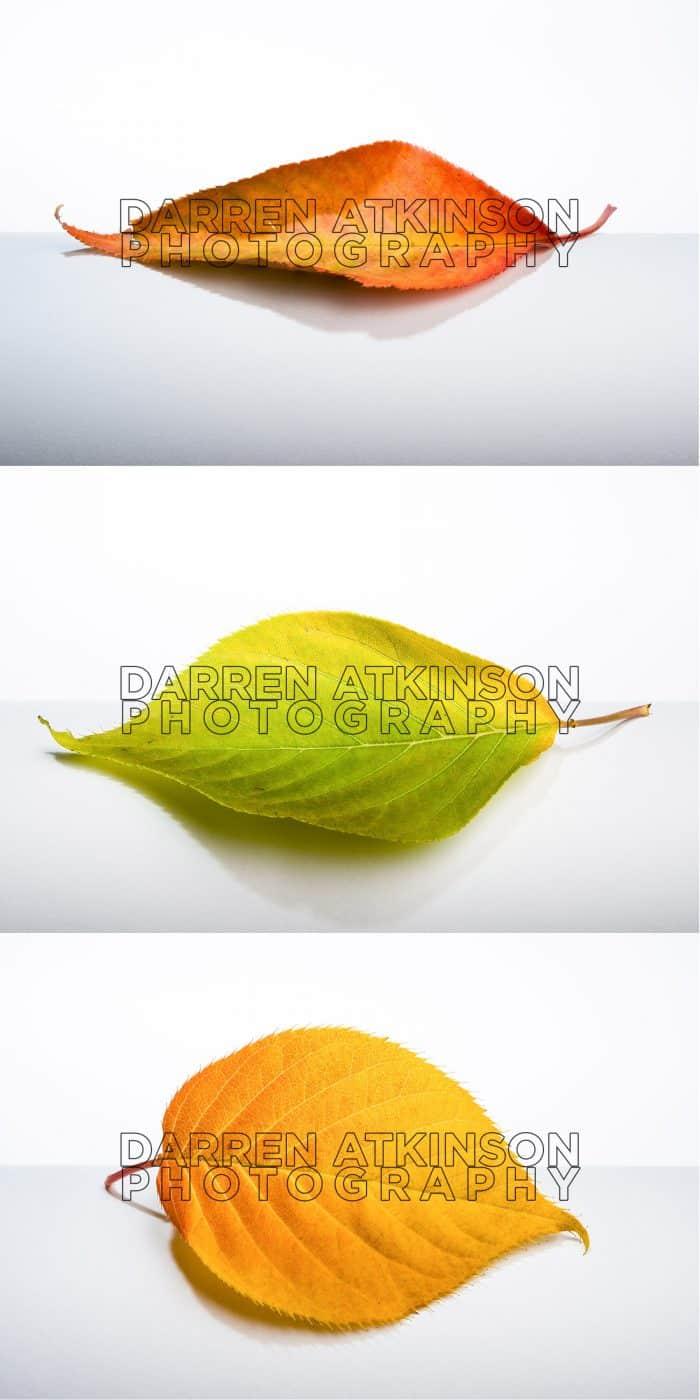 Leaf Set White