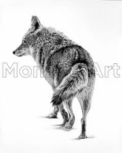 Monson190807-02 Coyote Courtship 2 32×40