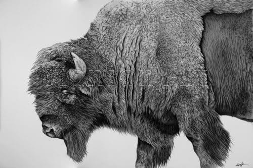 Monson200423-01 Bison Profile